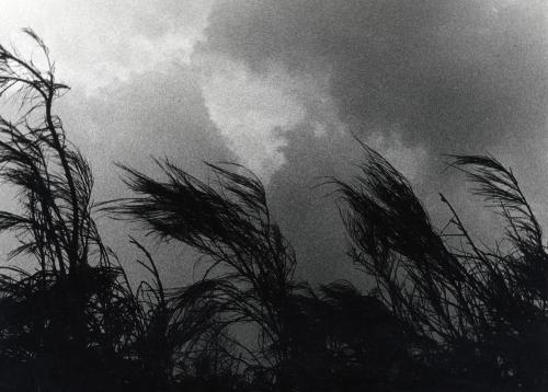 Storia del vento e della bambina, Stampa alla gelatina ai sali d'argento, CC BY-SA