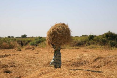 Collettivo Semi Rari, Progetto Fiume Niger - Raccolta, Digitale, CC BY-SA
