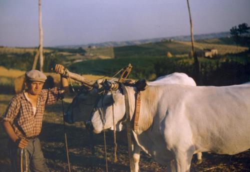 Crocenzi, Luigi, Puglia, colore, CC BY-SA