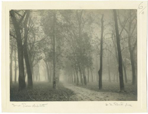Peretti Griva, Veduta di un vialetto alberato con nebbia del Parco Michelotti a Torino, carta/bromolio, CC BY-SA