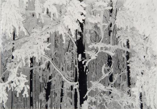 Tatge, George, Foresta di galaverna, Marebbe 1992, gelatina bromuro d'argento / carta / cornice, CC BY-NC-ND