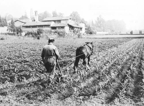 Bricalli, Samuele, Sarchiatura di un campo di granoturco, Gelatina a sviluppo in bianco e nero, CC BY-SA