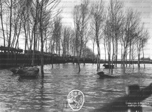 Bortolotti, Giovanni, Allagamento presso il Quadrato, buoi al guado, 01/02/1928, CC BY-SA