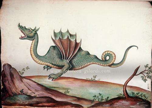 Aldrovandi, Ulisse, Drago Alato, XVI secolo, miniatura, CC BY-NC-ND