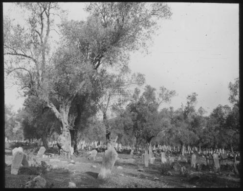 Cimitero di Elbasan tra gli ulivi, 1930 circa, Lastra fotografica in vetro, CC BY-NC-ND