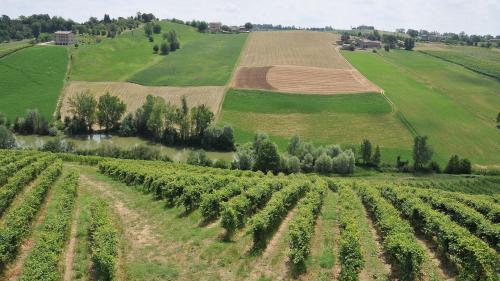 Fabrizio Dell'Aquila, colline coltivate, filari di vite, 2010, CC BY-SA