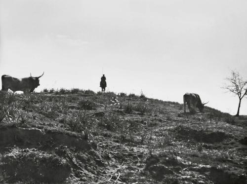 Andreis, Felice, Guardiano del bestiame, 1934, Stampa moderna da negativo originale (digitale fine art), CC BY-SA