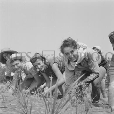 Publifoto - foto di Tino Petrelli, Mondine al lavoro nei campi nei dintorni di Binasco, 06/1951, CC BY-NC-SA
