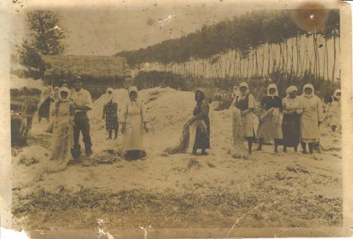 Lavorazione della canapa, CC BY-NC-ND